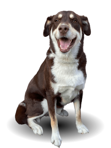 san antonio dog training boerne dog trainer new braunfels obedience training hill country pet resort stone oak dog boarding helotes doggy daycare san marcos puppy training austin canine trainers